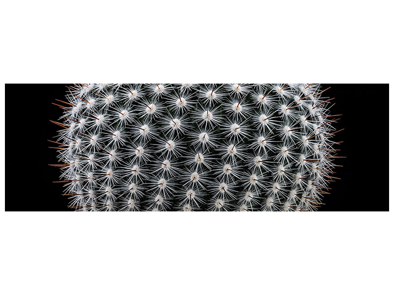 Panoramic Canvas Print Notocactus Scopa II