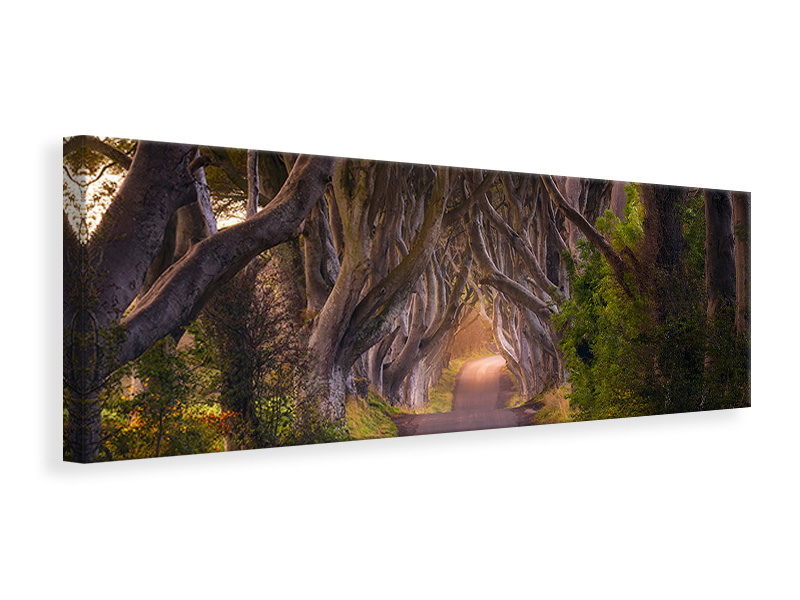 Panoramic Canvas Print The Glowing Hedges