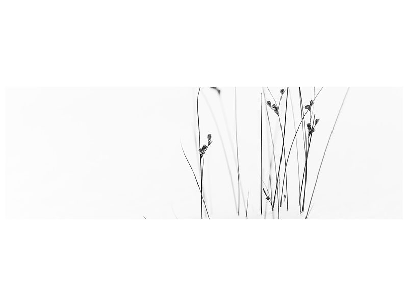 Panoramic Canvas Print Black On White