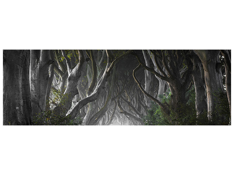 Panorama Canvastavla Dark Hedges