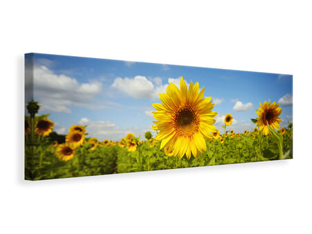 Panoramic Canvas Print Summer Sunflowers