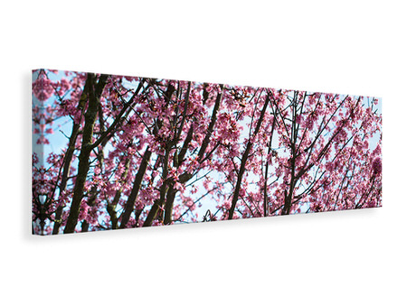 Panorama Canvastavla Japanese Cherry Blossom