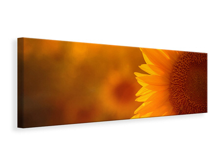 Panoramic Canvas Print Macro Sunflower