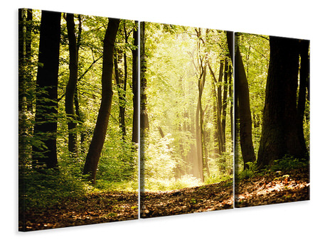 3 Piece Canvas Print Sunrise In The Forest