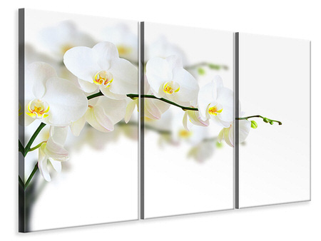 3 Piece Canvas Print White Orchids