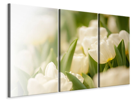 3 Piece Canvas Print Tulips Perspective