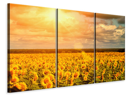 3 Piece Canvas Print Golden Light Sunflower