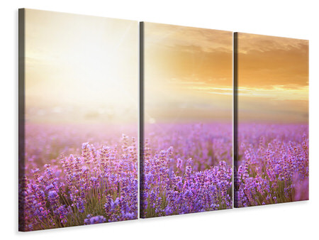 3 Piece Canvas Print Sunset In Lavender Field