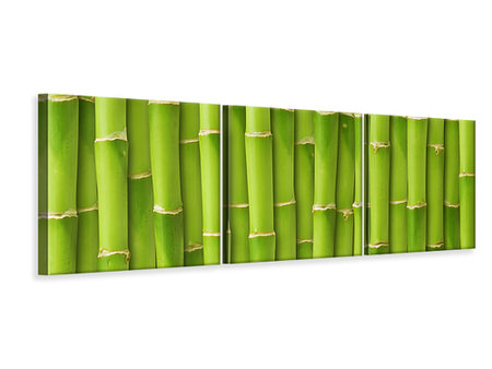 Panoramic 3 Piece Canvas Print Bamboo Wall