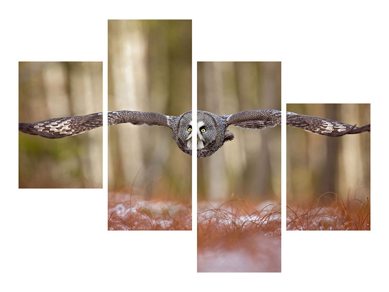 Modern - Canvastavla 4-delad Great Grey Owl