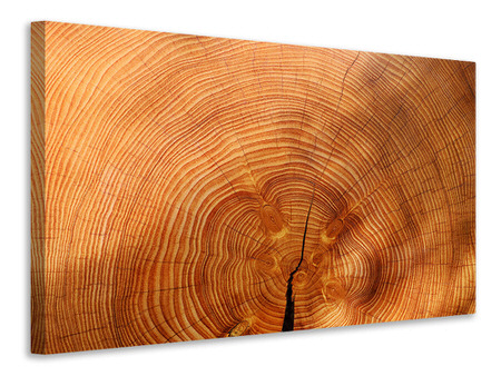 Canvastavla tree rings