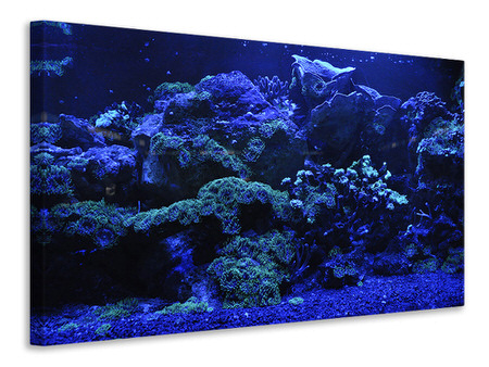 Canvastavla Coral reef in blue