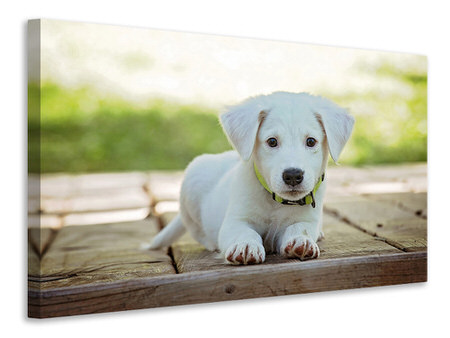 Canvas print Cute dog baby