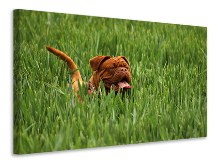 Canvas print The mastiff in the grass
