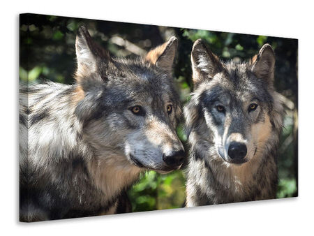 Canvas print 2 wolves