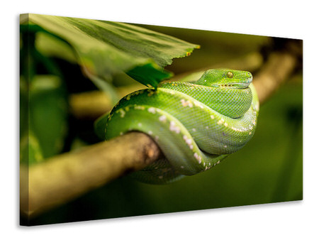 Canvastavla Green snake