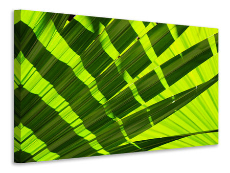 Canvastavla The palm leaf in XL