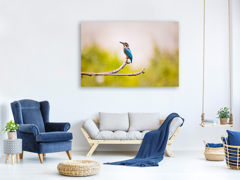 Canvas print The kingfisher