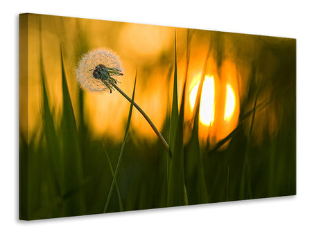 Canvas print Sunbathing