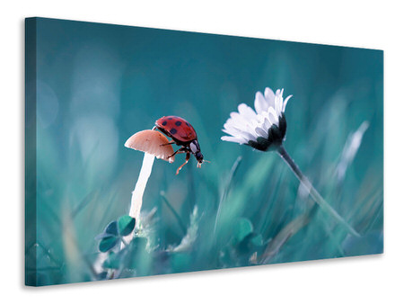Canvas print The Story Of The Lady Bug