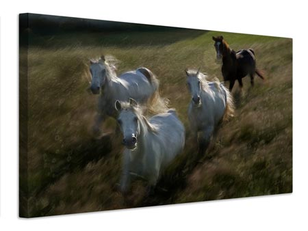 Canvas print Gallop In