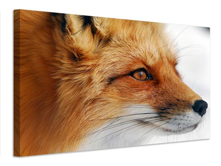 Canvas print Red Fox