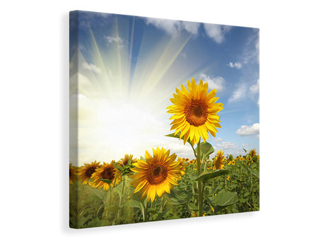 Canvas print Sunflower In Sunlight
