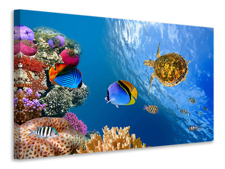 Canvas print Fish In the Water