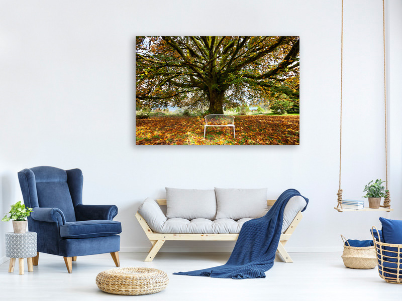 Canvas print My Favorite Tree
