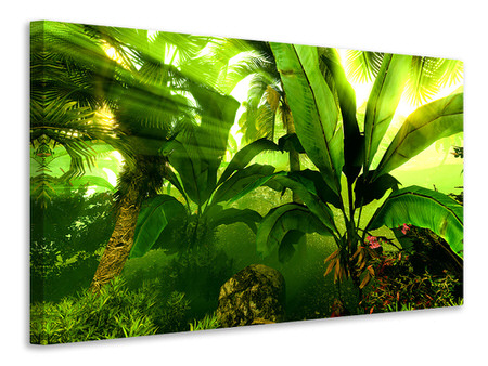 Canvas print Sunrise In The Rainforest