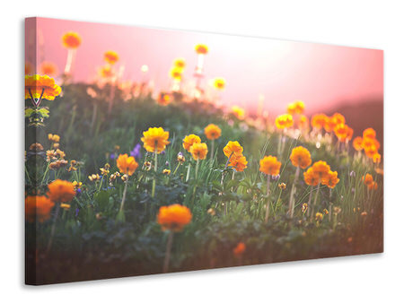 Canvas print The mountain Meadow