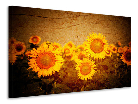 Canvas print Retro Sunflower
