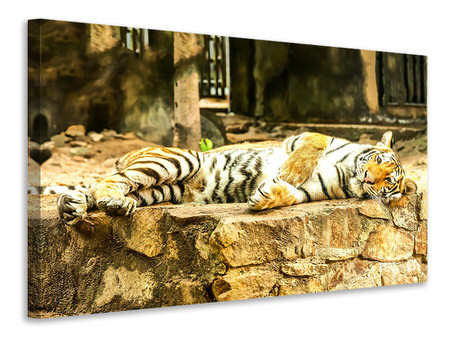 Canvas print The Siberian Tiger