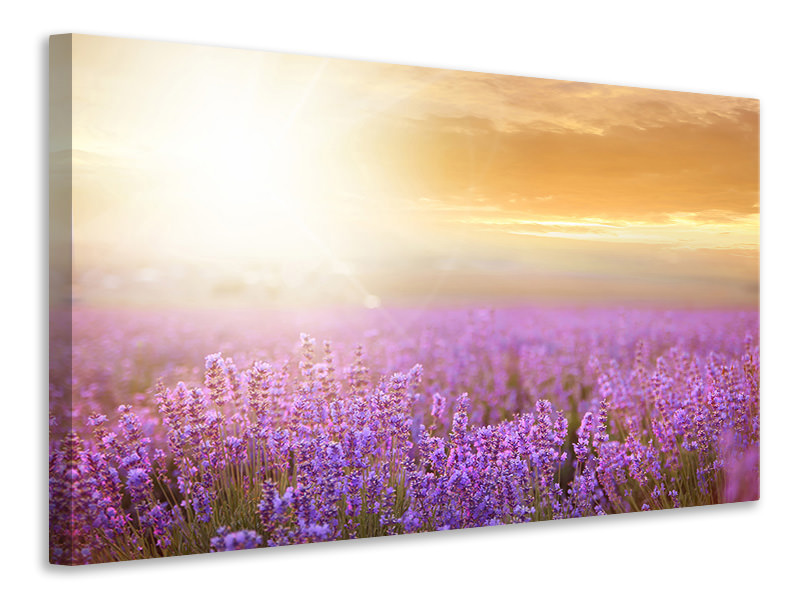 Canvas print Sunset In Lavender Field