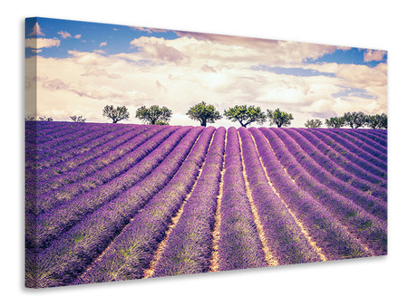 Canvas print The Lavender Field