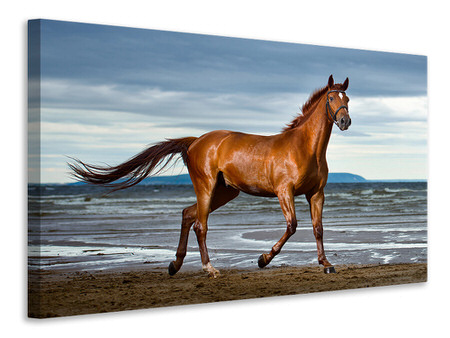 Canvastavla A Thoroughbred At The Sea