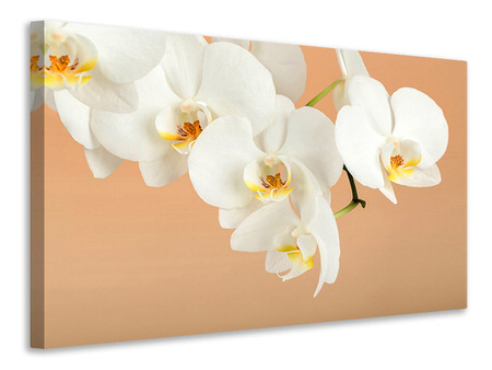 Canvas print White Orchid Flowers